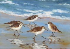 "Sandpipers Greeting Card for Sale by Barrett Edwards.  Our premium-stock greeting cards are 5"" x 7"" in size and can be personalized with a custom message on the inside of the card.  All cards are available for worldwide shipping and include a money-back guarantee."