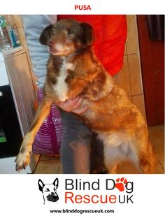 Pusa was rescued by a kind lady who has saved many poor strays in Romania. She lost one leg from a car accident and has Glaucoma in one of her eyes. She is a friendly girl, great with people and other dogs. Please email bdrukrehoming@yahoo.com if you have any questions or are interested in adoption.