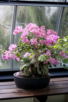 Flowering Bonsai | Flickr: Intercambio de fotos