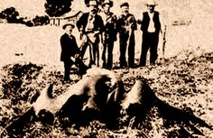 This photo of a giant bird-like cryptid circulated the U.S. in 1890. The creature was linked to the area around Tombstone, Arizona. A photograph was presumably taken in the early 1890s of several cowboys and ranchers holding up what appears to be a pterodactyl. The beast was apparently seen flying in the area, and was lured by some ranchers into a trap in the Huachuca Mountains, west of Tombstone, where they killed the creature.  http://www.phantomsandmonsters.com/2013_03_10_archive.html