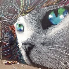 Tremendos ojos de gato.
