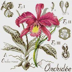 Foto Cross Stitch Love, Cross Stitch Samplers, Cross Stitch Flowers, Cross Stitching, Cross Stitch Patterns, Iris Flowers, Creative Activities, Blackwork, Flower Designs
