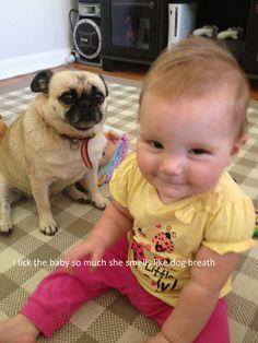 "Pug shaming.... ""I lick the baby so much she smells like dog breath"""