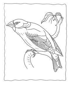 bird migration coloring pages - photo#40