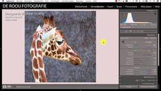 Adobe Lightroom Tutorial: Vensters in- en uitschakelen