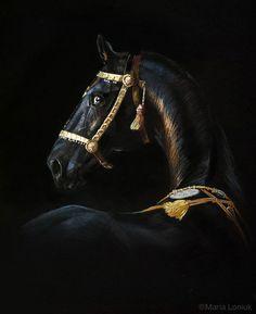 Horse Head, Horse Tack, Mediums Of Art, Arabic Calligraphy Art, Fancy Schmancy, Equine Photography, Flora And Fauna, Horse Breeds, Beautiful Horses