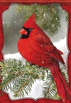Red Cardinal House Flag - Carson - Red Cardinal in the Snow Christmas Paintings, Christmas Art, Christmas Topper, Pretty Birds, Beautiful Birds, Illustration Noel, Foto Real, Cardinal Birds, Bird Pictures