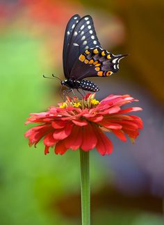Another Butterfly | Flickr - Photo Sharing!