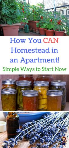 Simple ways you can be an apartment homesteader now. Starting homesteading where you are - don't wait for a farm.