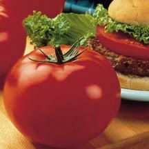 Big Beef Tomato pictured @ Totally Tomatoes.com