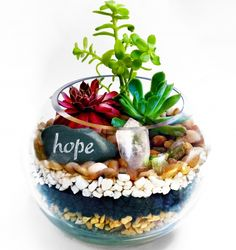 Join us for a Plant Nite event Apr at PY Kitchen + Wine Garden at the Doubletree by Hilton Outdoor Patio, 1995 S. Succulent Arrangements, Succulents Garden, Garden Plants, Cactus, Newhaven, Miniature Fairy Gardens, Catering, Buy Tickets, Gardening