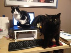 Caturday: Um, About Your iTunes Account