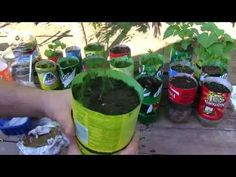 Amazing Self Watering Soda Bottle Garden - YouTube