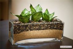 Plant: Sansevieria   Light: No sunlight needed   Care: Water every 6-8 weeks