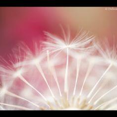 """▒ 오늘 하루가 선물 입니다 ▒  늘 반복되는 지루한 일상 이지만  마음과 생각이 통하여 작은 것에도  웃음을 나눌 수 있는 소중한 사람들을 만날 수 있으니  오늘 하루가 선물 입니다.  늘 실수로 이어지는 날들이지만 믿음과 애정이 가득하여 어떤 일에도 변함없이  나를 지켜봐 주는 가족이 있으니 오늘 하루도 선물입니다.  늘 불만으로 가득 찬 지친 시간 이지만  긍정적이고 명량하여 언제라도 고민을 들어줄 수 있는 좋은 친구가 곁에 있으니  오늘 하루도 선물 입니다.  늘 질투와 욕심으로 상심되는 날들이지만  이해심과 사랑이 충만하여 나를 누구보다  가장 아껴주는 사랑하는 연인이 있으니  오늘 하루도 선물 입니다.  그 많은 선물들을  갖기에는 부족함이 많고  하루하루 힘들다고 투정하는 """"나"""" 이지만.....  그래도 내가  열심히 살아갈 수 있는 이유는  이 소중한 사람들이 있기 때문이다.  그 어떤 값비싼 선물보다  소중한 사람들을 만날 수 있는   오늘 하루가 가장 큰…"""