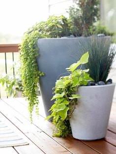 Use plants that drape over larger pots. Sweet potato vine recommended in this post.