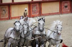 Roman chariot being driven at full gallop by wonderful white horses at the Puy du Fou. Very special to see a chariot race live!
