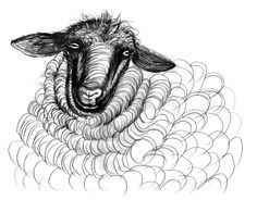 Cortez, Britt Browne's Churro sheep drawing