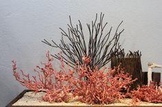 세계조가비 박물관  수천점의  조개를  전세계에서 모으신 관장님 조가비 작품