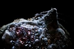 These photographs will change the way you look at spoiled food. Posed dramatically in chiaroscuro lightning, they emerge from darkness with its ridges of rot, velvet layers of fungi, bubbles of tin…