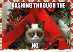 Grumpy cat finds he didn't stop christmas from coming.