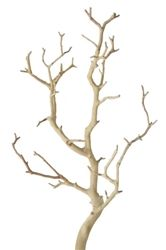 Manzanita Branches - lots of decorating possibilities, and only $5 each!