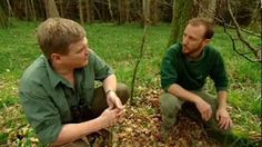 ray mears wild britain - YouTube