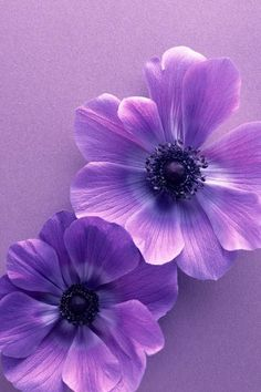 Dreaming in purple ~