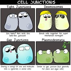 The Amoeba Sisters — Resist the road-rage on the protein super highway. Biology Memes, Biology Facts, Study Biology, Biology Lessons, Teaching Biology, Science Biology, Science Humor, Cell Biology, Science Education