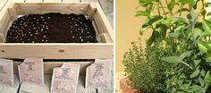In een krat!  Kruidentuin starten voor beginners - kruiden kweken binnenshuis