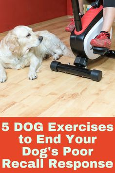 Learn these 5 step-by-step dog exercises that will finally put an end to your dog's poor recall response…and learn how to make your dog listen for good!  #howtomakemydoglisten #howtomakemydoglistentome #makeyourdoglisten Dog Training Methods, Dog Training Techniques, Puppy Training Tips, Potty Training, Training Your Dog, Puppy Barking, Step Workout, Dog Potty, Best Puppies