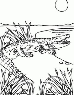 Beautiful Gator Coloring Pages 29 Alligator Lurking On The