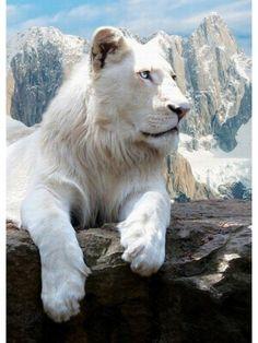 20 animais albinos mais fantásticos do planeta | Mundo BR