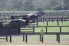Contented #horses here in their outdoor #yards and sheltered 3stables @Building Works Australia
