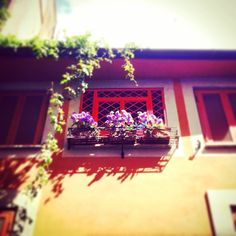 Walking in #trastevere #flowers #fiori #windows #finestre #roma #rome #italy #italia