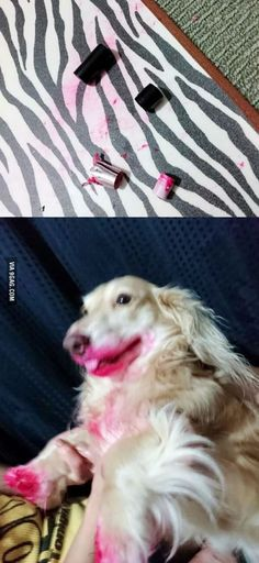 I have absolutely no idea who ate the lipstick
