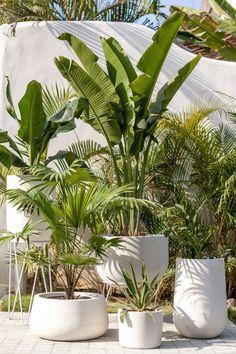 Back Gardens, Outdoor Gardens, Backyard Patio, Backyard Landscaping, Tropical Garden Design, Concrete Pots, Terrace Garden, Plant Decor, Indoor Plants