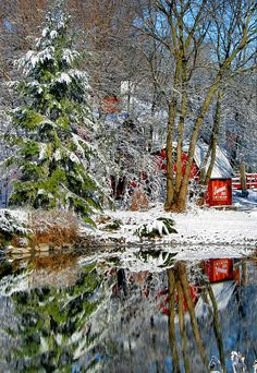 Reflections in The Snow.