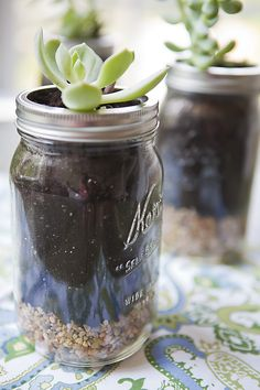 Mason jars with succulent plants