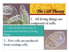71 Slides!! And notes!! This powerpoint is packed with pictures, diagrams, and color! The title of this product is: Cell Structure and Function. This product contains a 71 slide powerpoint presentation, a copy of notes for the teacher (14 pages), and a copy of the notes for the student (15 pages). $6.99