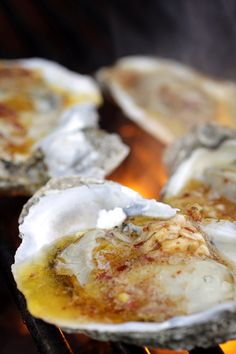 grilled oysters with garlic-chili butter