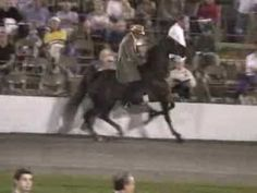 Cruelty Behind Tennessee Walking Horses. This is absolutely gut twisting :( people who do this deserve to be in jail. I'm sharing this video to show people the truth behind the scenes of some major breed shows.