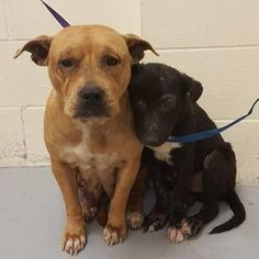 For the love of animals. Pass it on.Dumped at a shelter. all they ad was each other until some loving humans took over.