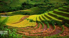 Che Cu Nha is a commune in Mu Cang Chai district, Yen Bai, Vietnam...