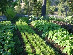 Biodynamic French intensive gardening method. Here's some great basic info.