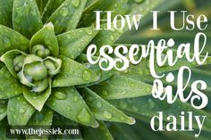 How I Use Essential Oils Daily for A Healthier Lifestyle