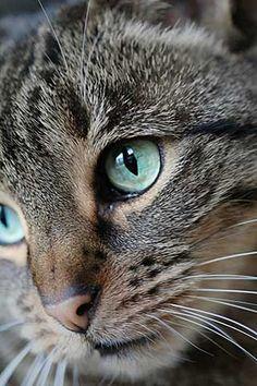 Stephanie Deissner (F1 Online) - Emotionen Katzen 3 - Fotoprints