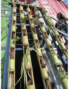 Bamboo grow wall.  How about PVC run horizontally mounted to A frame or leaners?