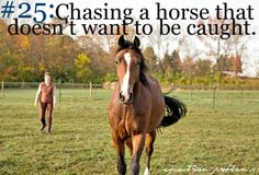 in the past, it wasn't unusual for it to take 1/2-1 hr to catch my gelding...He has gotten MUCH better. And he wasn't the only one that bad either...Minis, ugh! They've gotten better too though :)