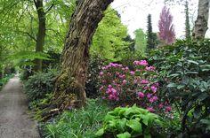 Arboretum Trompenburg, Rotterdam, eigen foto/ own photo